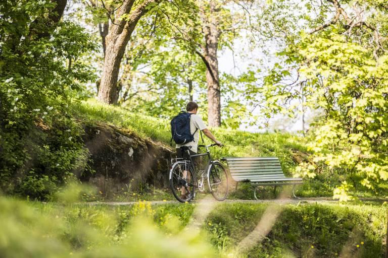 Pyöräilijä kesäluonnossa, kuvituskuva