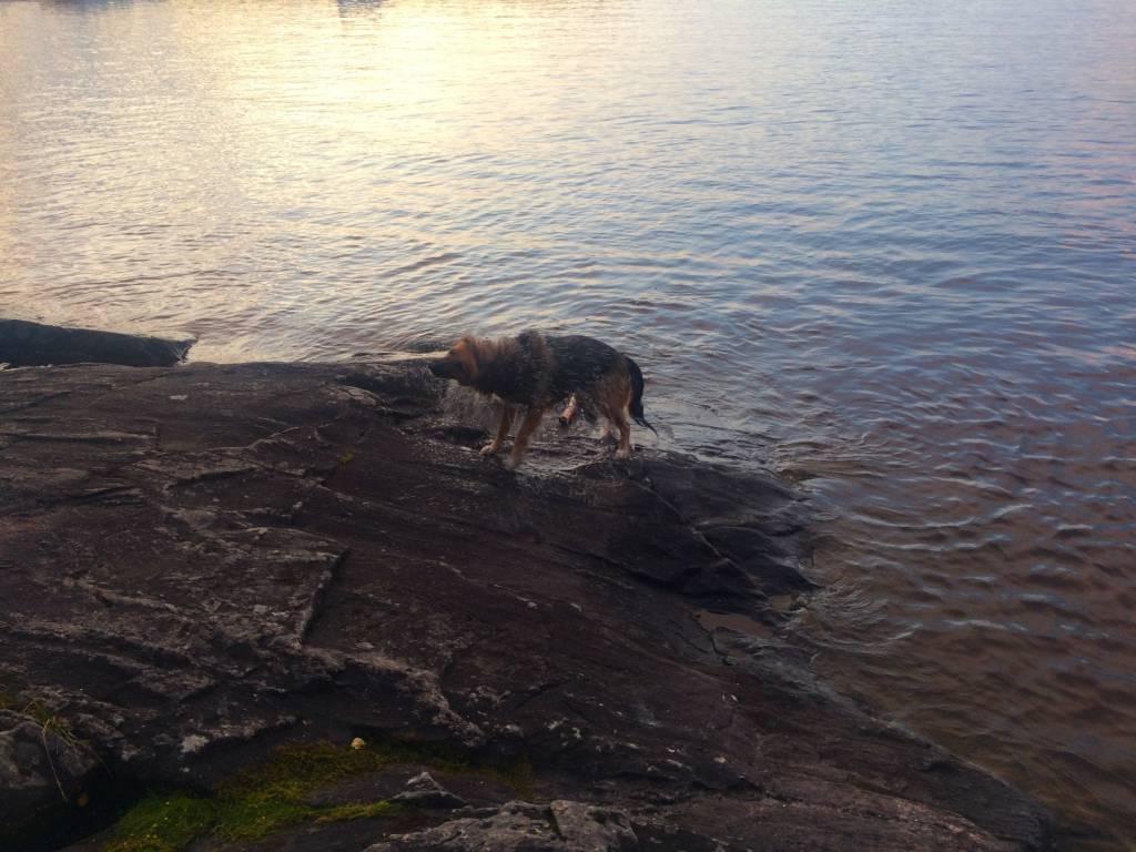 Luiza's dog Mia on the beach