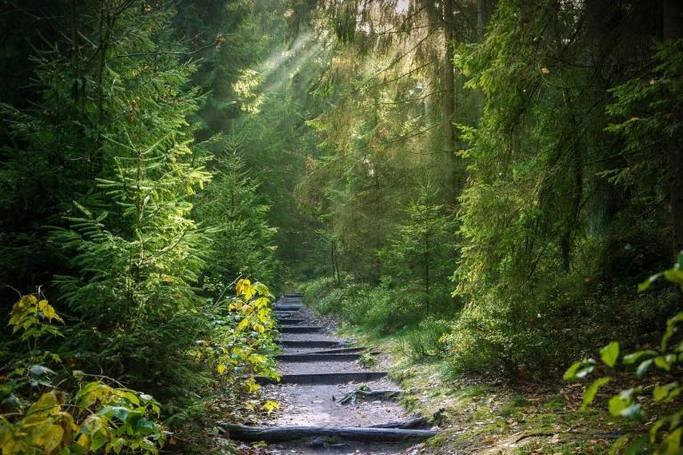 Polku vehreässä metsässä