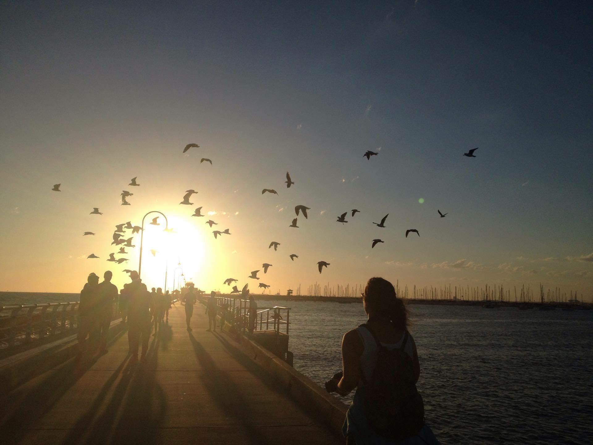 Auringonlasku, lentäviä lintuja.