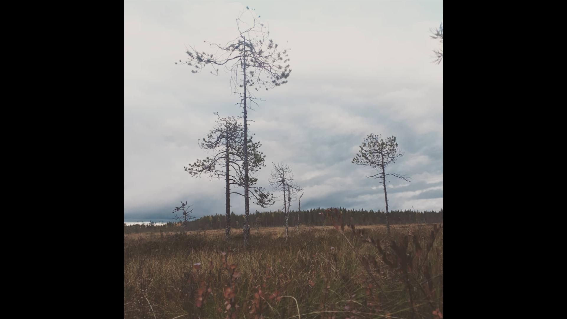 Puita ja peltoa.
