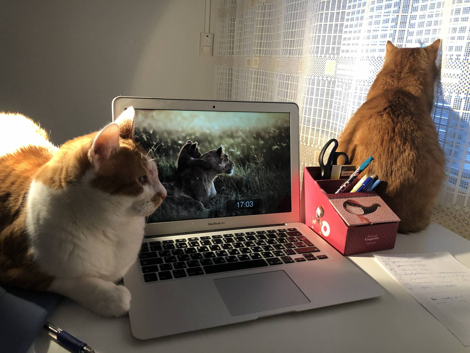 Two cats sitting next to a laptop.